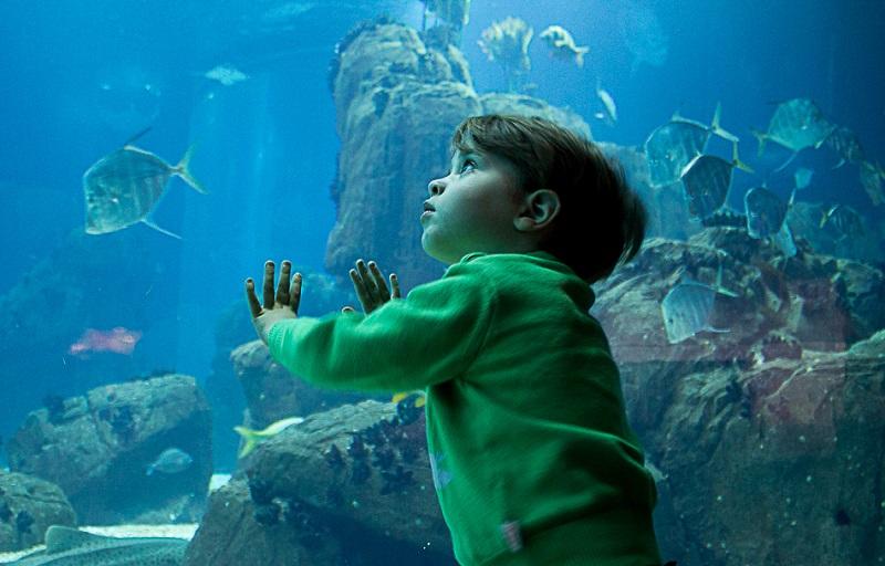 Criança vendo peixes no Oceanário de Lisboa