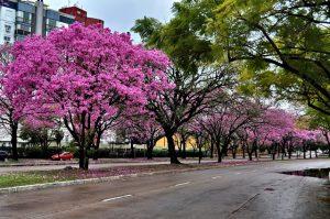 Primavera em Lisboa - ruas floridas