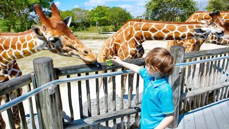 Criança no Jardim Zoológico de Lisboa