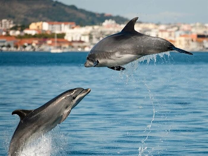 Estuário do Sado - golfinhos
