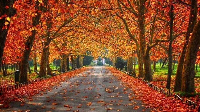 Paisagem típica de outono